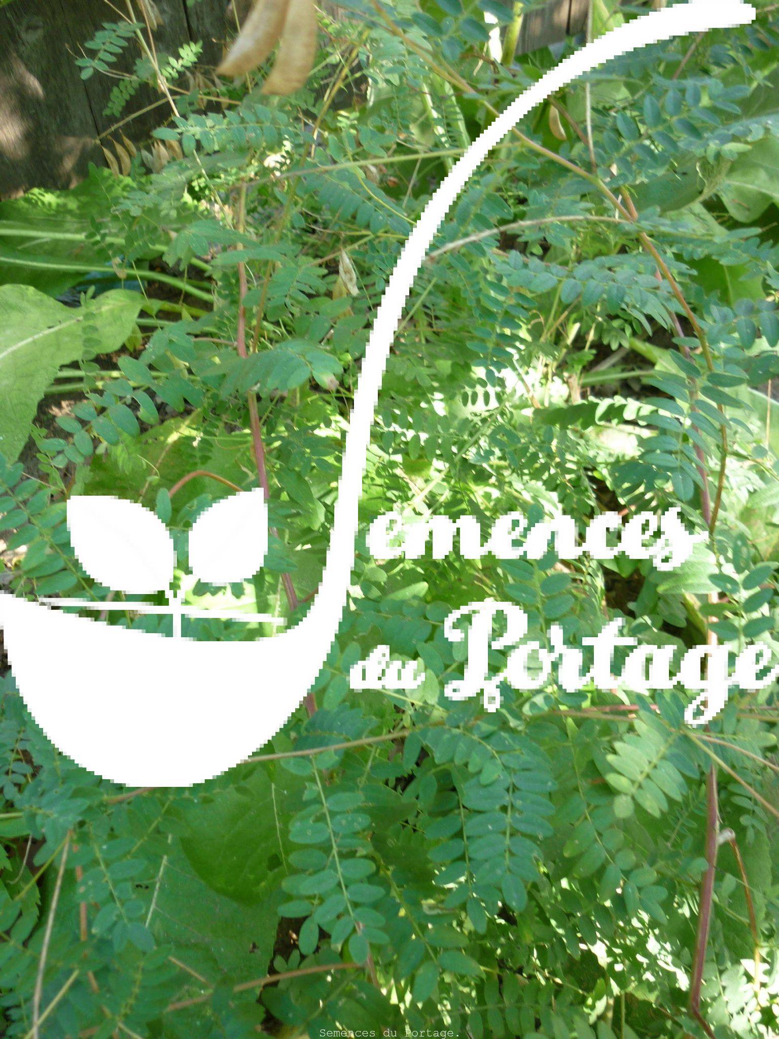 Astragale semences du portage for Commande plante en ligne