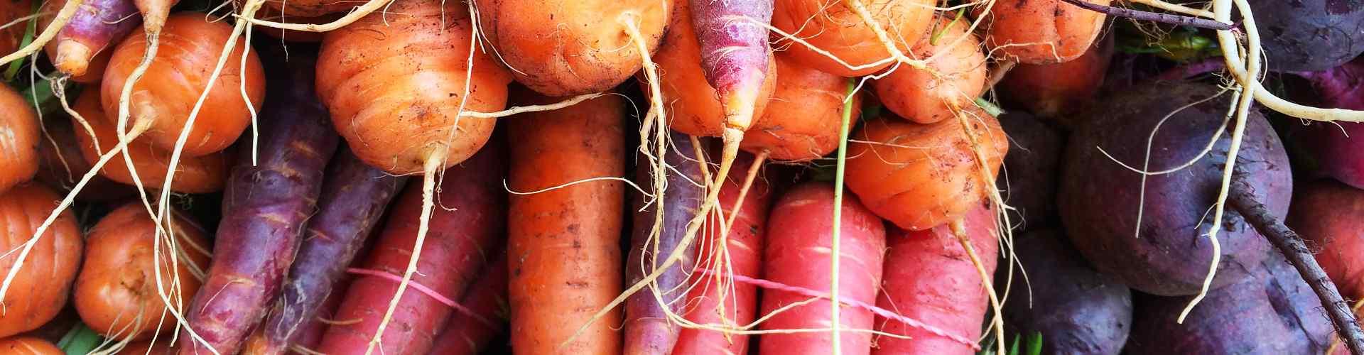 legumes-gastronomie
