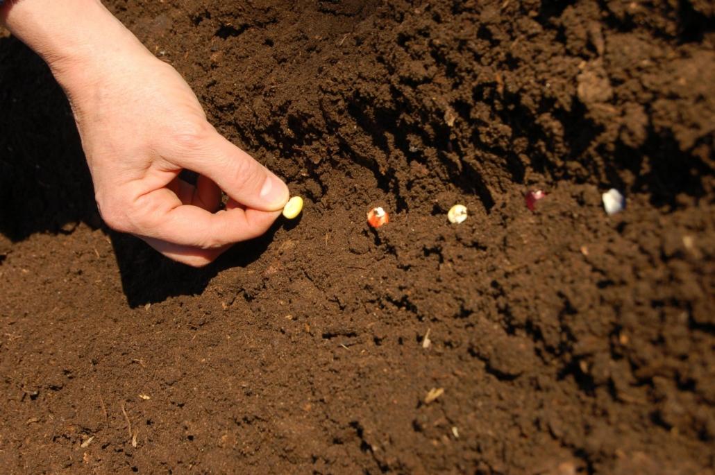 semis maïs 2