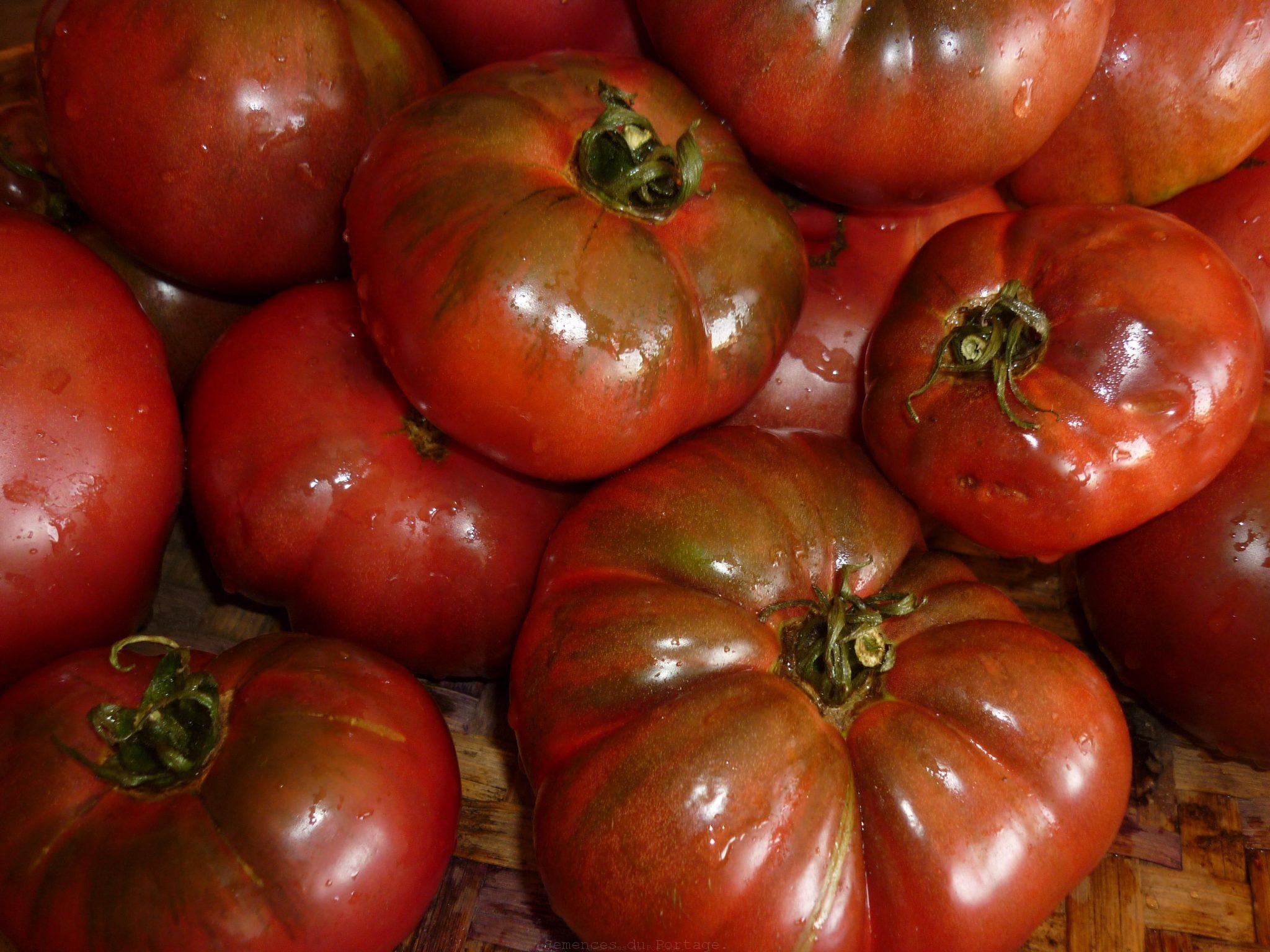 Tomate noire de crim e semences du portage - Tomate de crimee ...